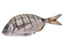 ブラジル・淡水魚ティラピアの皮で火傷治療(depositphotos.com)