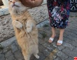 トルコの猫の人懐っこさよ!まだ帰らないでと猛烈スリスリを展開中