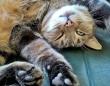 猫が飼い主にお腹を見せるのはなぜ?動物行動学者たちの答え
