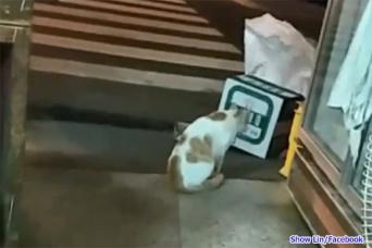 仲間の猫が交通事故に。その亡骸を入れた箱の前で悲しみの鳴き声を上げる猫