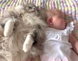 猫と赤ちゃん「安眠妨害しないでニャ!」寄り添って仲良くお昼寝中の寝顔が可愛すぎる件