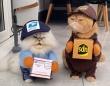 お荷物お届けに伺いました!2匹の猫の配達員