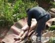 売買目的なのか、女性の遺体を墓から掘り起そうとする業者