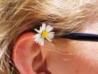 人間の耳の中に巣をつくってきたクモ。病院で耳に水を流し込んだところ、トコトコと出てくる様子(※クモ出演中)