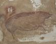 インドネシアで発見された世界最古の動物の壁画。4万5千年以上前に描かれたイノシシ