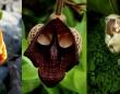 植物のなんちゃって能力が半端ない。何かの顔や形そっくりに擬態した17種の植物