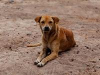 フードデリバリーのアプリで野良犬に食べ物を配達する男性。それにはこんな事情があった(インド)