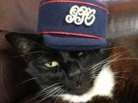 猫(モデル)