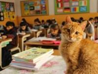 猫向け優良人間づくりは早期から。小学校で毎日授業を受ける野良猫、子供たちの指導係も(トルコ)