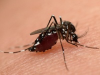 蚊に刺されやすいのは中間所得層?(depositphotos.com)