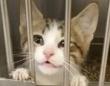犬を引き取りに来たら猫がついてきました。施設に出向いた女性に子猫が猛アピール(アメリカ)