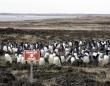 そこにはこんなドラマがあった。フォークランドの地雷原に住むペンギンたちの物語