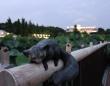 真夏の夜の動物園