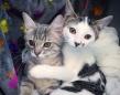 保護された子猫、仮里親の家で出会った別の保護猫と離れられない仲に(カナダ)