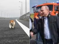 プーチンよりも先だった。完成した40億ドルのクリミア橋を最初に渡ったのは猫