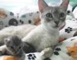 我が子を失った母猫に、孤児となった子猫を引き合わせたところ、鳴き声を聞いた瞬間母性が溢れる(アメリカ)