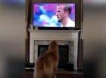 """サッカーイングランド代表""""ハリー・ケイン""""のゴールに歓喜するワンちゃん!"""