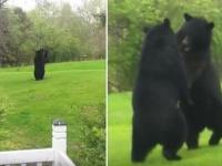 ファッ!?もう一度見てファッ!?家の前庭でクマが二足立ちで決闘していた件(アメリカ)