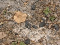 カンボジア大虐殺の首謀者ポルポトの墓を訪問してみた