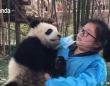 メイさん、メイさん、これなぁに?マスクが気になる子パンダと飼育員との異種格闘戦