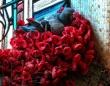 犯人は鳩。慰霊碑から花を盗んでゴージャスな巣を作っていた件(オーストラリア)