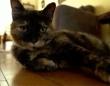 フランスで初めてコロナに感染した猫が無事回復