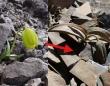 人間から身を守るため、カモフラージュの技を習得した植物