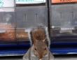 「俺専用のナッツを用意しろ」連続窃盗犯のリスとの交渉に応じた店主、その結末は?(イギリス)