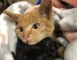 山火事に巻き込まれ、ヒゲを失いながらも、弟猫を必死に守り続けたお姉さん猫(アメリカ)