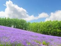 大学生が選ぶ、地味と見せかけて見どころたっぷりな都道府県ランキングTop5!