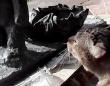 猫、できたての像に体アタック。出来立てほやほやの像に全身で突撃するも推定無罪