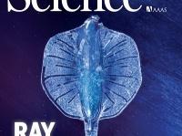 画像は『Science』(AAAS)より