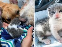 生まれて間もない子猫を保護。そのボディーガードをかって出た3匹の犬(アメリカ)