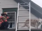 屋根から降りれず困惑する犬が救助しに来た消防隊員に「ありがとう」のキス!
