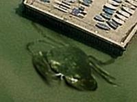 ゴジラ級の未確認生物「巨大カニ」が航空写真で撮影される=イギリス