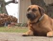 火事に気付き飼い主を起こして避難させたお手柄犬。賢明で迅速な犬の行動がまたしても人の命を救う(アメリカ)