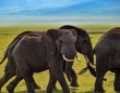 宇宙の中心で象を数える。衛星カメラとディープラーニングを使用した画期的な個体数の調査法が開発される