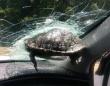 突如亀が飛んでいて走行中の車に衝突、フロントガラスに突き刺さるハプニングが発生(アメリカ)