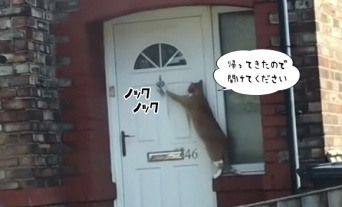 「帰りました。開けてください」きちんとドアをノックする猫の個体が確認される(イギリス)
