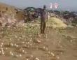 養鶏業者がゴミ処理場に腐っていたはずの大量の卵を捨てたところ、ほとんどが孵化してしまうハプニング(ジョージア)