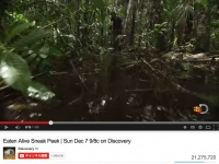 YouTubeチャンネル「Discovery」より