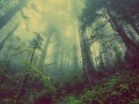 6つの木から一番気になるものを選ぼう。あなたの人生を無意識に動かしている本来の性格がわかる心理テスト(占い)