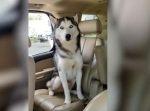 絶対に降りたくない〜! 車内で必死に逃げ回るワンちゃんが可愛い。