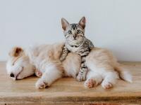 犬と猫を仲良くさせるにはフェロモンの力を借りればいい(英研究)