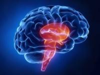 <脳幹>は呼吸や心臓の動きなどを司る中枢(depositphotos.com)