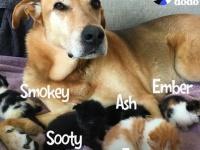 火事現場から救い出された子猫、りっぱに成長し育ててくれた犬と友情を結ぶ