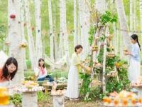 「白樺スイーツツリーで優雅に楽しむトマムピクニック」